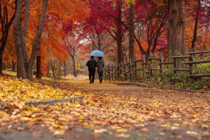 Chinesisches Horoskop für November